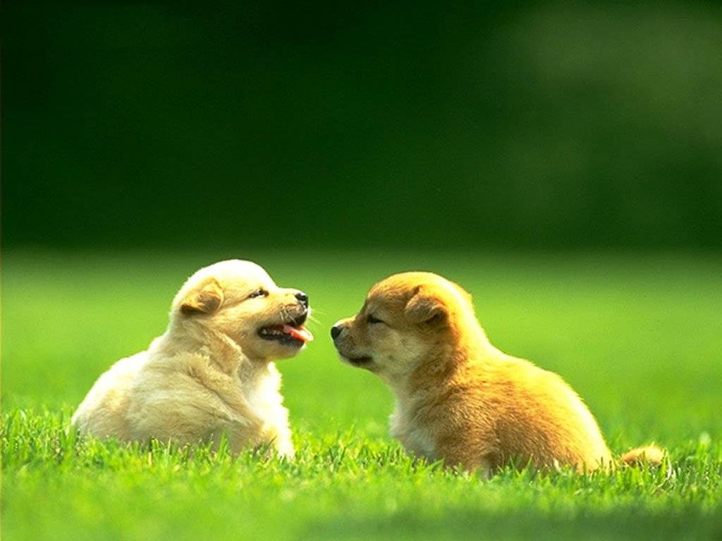 Love Dogs Quotes Wallpaper : cagnolini - Animali - Sfondi Desktop GRATIS