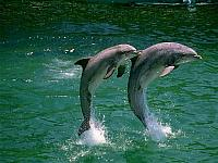 delfini-in-sincronia
